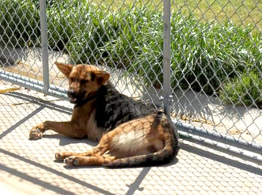 Brownsville-Haywood County Animal Shelter